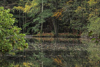Pond in the Odenwald