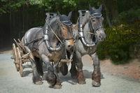 2 Pferde.jpg