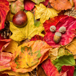 Colorful autumn foliage lying on the ground.