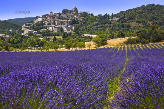 old village Simiane-la-Rotonde with lavender field in foreground
