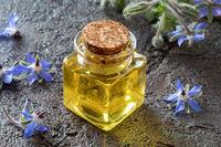 A bottle of borage oil with fresh borage plant