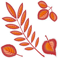 Four different autumn orange or red leaves - rowan, maple, birch, aspen - on a white background. Pattern, seamless texture