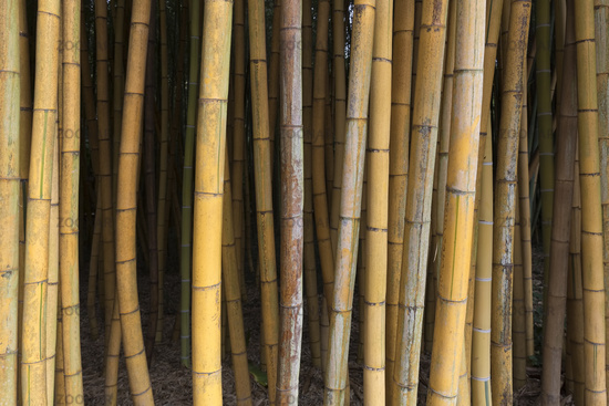 Brown Bamboo