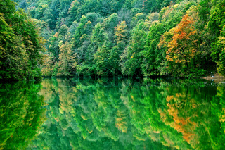 Forest lake morning in autumn
