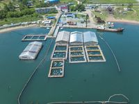 whale prison for dolphins and killer whales