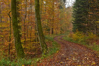 forest path in autumn forest