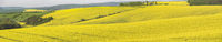 Panorama with rape fields in South Moravia