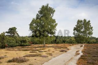 Weg durch die Heidelandschaft