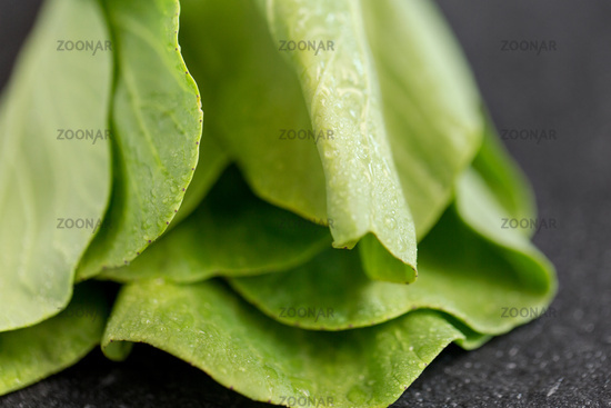 close up of bok choy cabbage on slate background