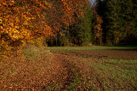 Field with forest edge in autumn, near Pommelsbrunn, Franconia, Bavaria