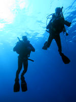 silhouette of scuba divers against the light