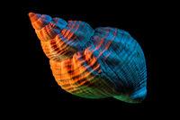 Beautiful Sea Shell Closeup with Colorful Studio Light