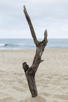 Nazare, Portugal - A piece of drifwood plade upright on the beach