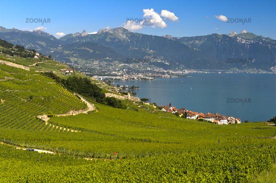 Postcard landscape with vineyards at Lake Geneva, Rivaz, Lavaux, Vaud, Switzerland