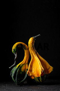 Two decorative pumpkins on a black background.