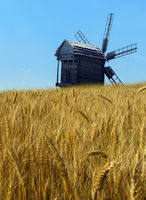 Panorama of Agriculture Wheat crop field rural lanscape with windmills