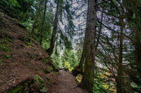 Hiking path Meeraner Hoehenweg crossing the forest near the Leiter Alm in Italy