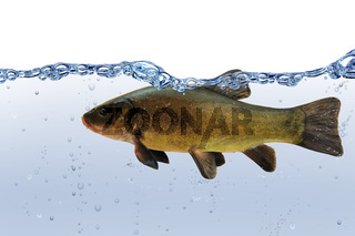 Fische 29
