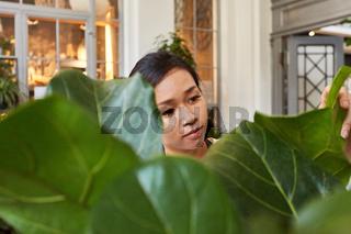 Floristin kontrolliert bei Grünpflanze die Blatt Qualität