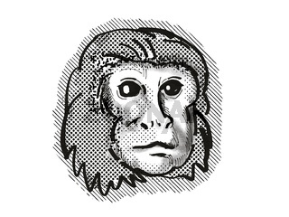 Golden Lion Tamarin Monkey Cartoon Retro Drawing