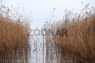 fog autumn landscape