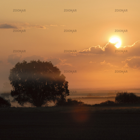 Sunrise above wet meadows and lines of trees and bushes