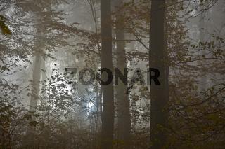 Nebelstimmung im Herbstwald
