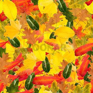 Buntes Herbst Laub und Blätter als nahtloses Muster