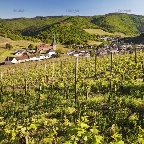 View over the vineyards to the place Mayschoss, Ahrtal, Eifel, Rhineland-Palatinate, Germany, Europe