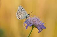 Butterfly by sunrise on flower