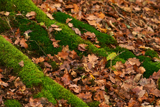 Moss-covered roots in autumn