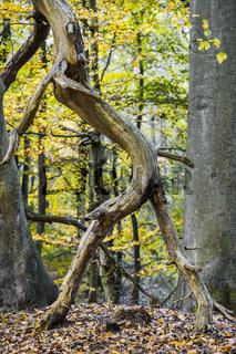 Darsswald - Der grosse Schritt