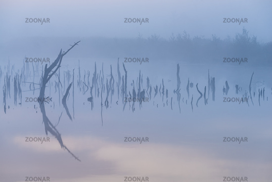 Marsh in Germany at autumn