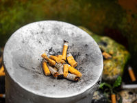 Squeezed remnants of cigarettes in an ashtray