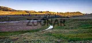 morning nature scenes in hayden valley yellostone wyoming