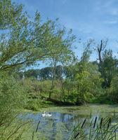 Urdenbacher Kaempe Nature reserve in Duesseldorf,North Rhine westphalia,Germany