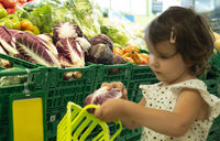 Child shopping radicchio in supermarket.