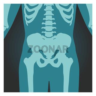 X-ray shot of pelvis and spinal column, human body bones, radiography, vector illustration.
