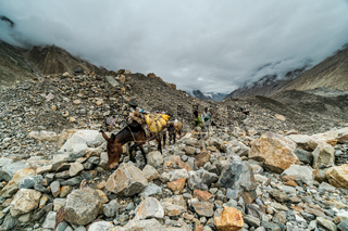 Sherpas with mules