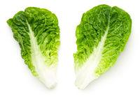 Romaine Lettuce Leaves Isolated On White Background