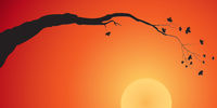 Silhouette of a tree branch at sunset