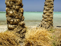 The trunks of two palm trees on the background of the sea