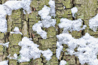 covered with snow tree bark