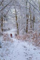 Snow covered trail with a wooden footbridge leading through a snowy forest early on a winter morning.