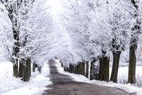alley in Masuria in Winter