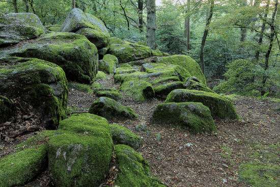 Natural monument in the Odenwald forest