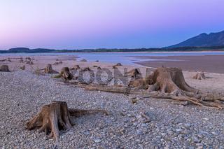 Baumstumpf im ausgetrockneten Forggensee nach Sonnenuntergang