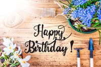 Sunny Spring Flowers, Calligraphy Happy Birthday, Wooden Background