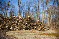 Forstwirtschaft, Holz