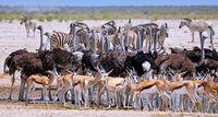Full house at the waterhole, Etosha National Park, Namibia